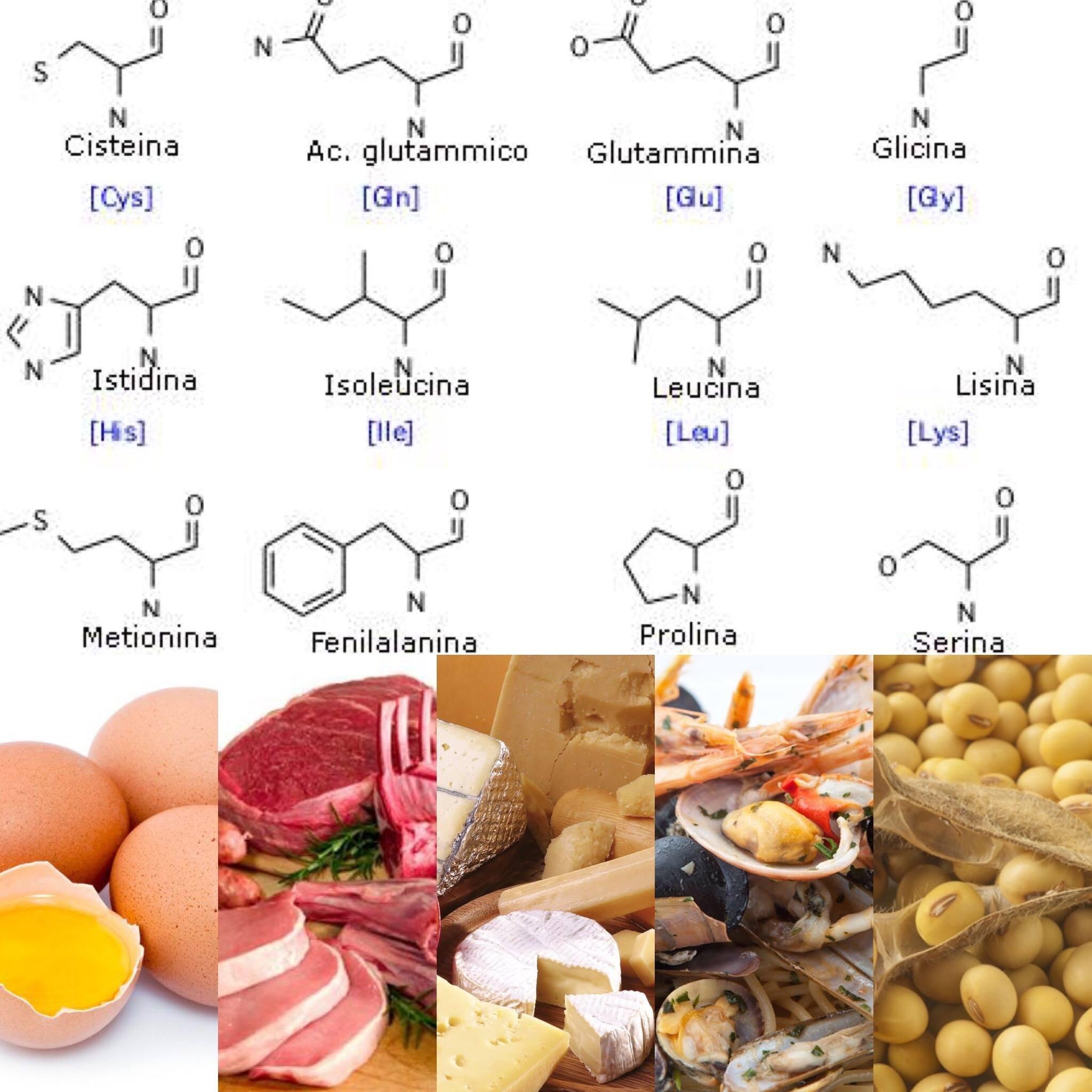 Come Migliorare La Digestione Di Alimenti Contenenti Diverse Fonti Proteiche Alkaenergy