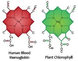 Lenergia Si Nutre Anche Di Clorofilla 2 Alkaenergy